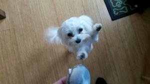 Daisy, SHARP mascot